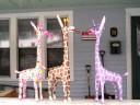 American Giraffes at The Giraffe Factory