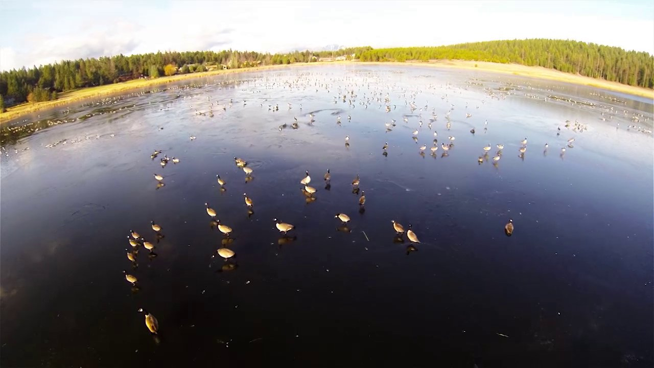GoPro Hero 3 over Geese with the Hexakopter XL