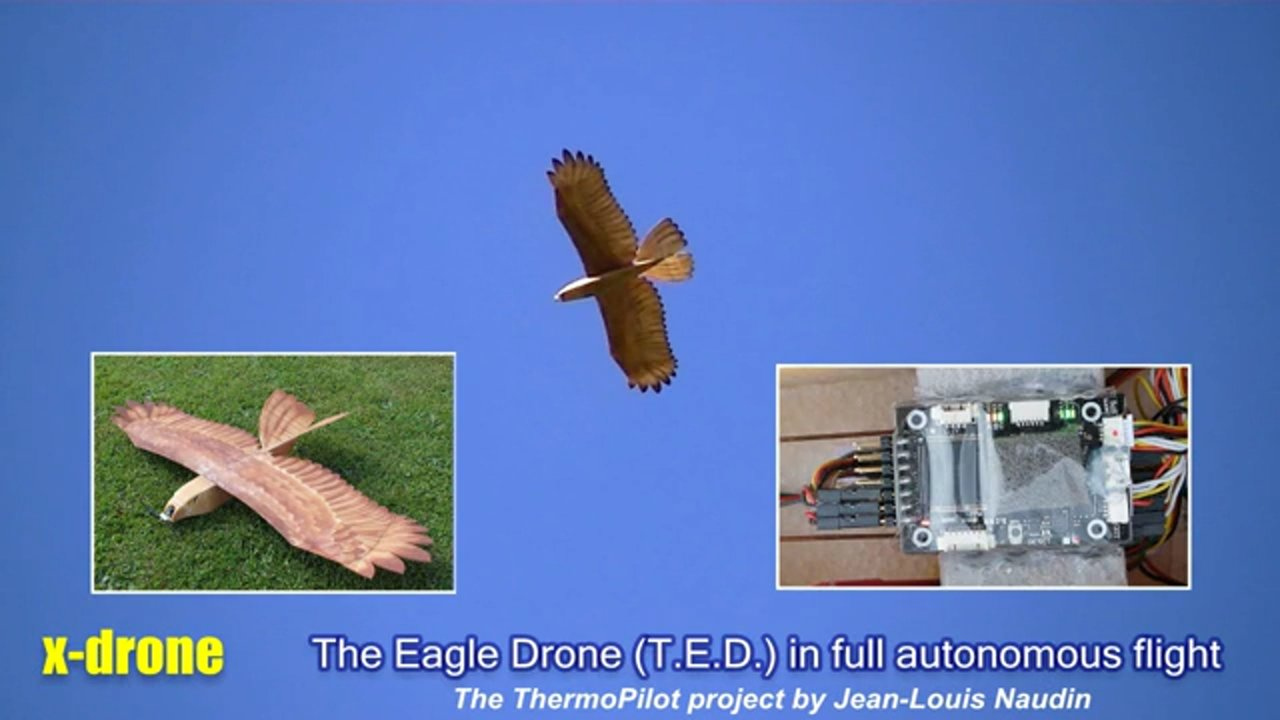 Full autonomous thermal hunting with TED (The Eagle Drone) piloted by the ThermoPilot 7.21