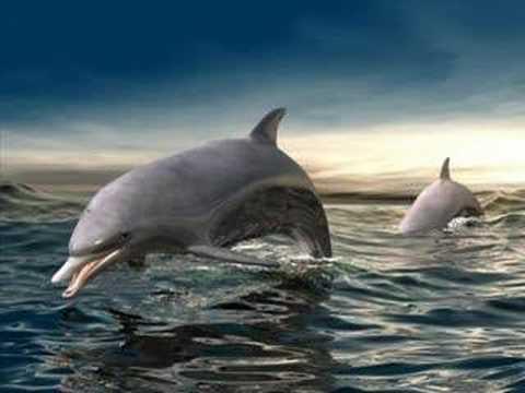 DELFINES MUSICA REJANTE(www.delfineoceano.es)