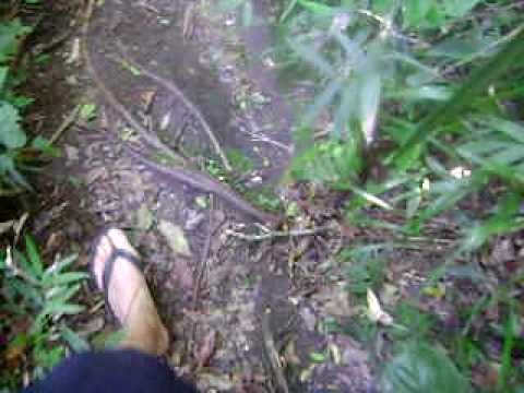 trilha lagoinha do oeste - Floripa