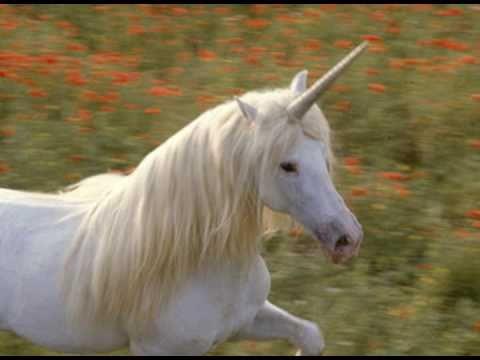 Mathew Dixon's Unicorns I've Known