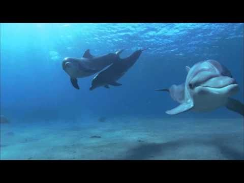 ♫ MEDWYN GOODALL - Dolphin Companion (Music for Relaxation & Meditation)