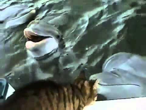 Amistad Gato Delfín - Cat Dolphin Friendship