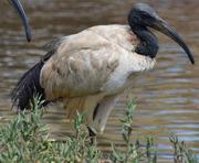 Okavango Safari Tours