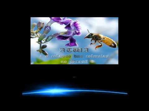 ABELHAS, O QUE É PRECISO SABER (Série Terra - Vida - Humanidade) 3D