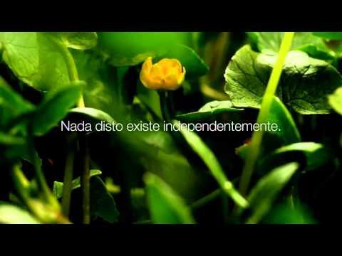 A Canção do Avadhut - Lido por Mooji - Essência Una