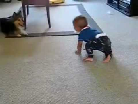 DOG PLAYING TAG WITH BABY!!  ENJOY !!