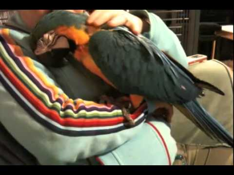 Young Happy Macaw. FLV