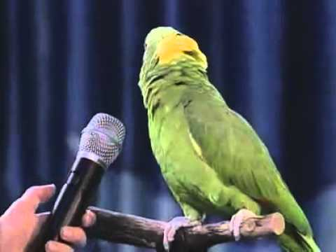 Unbelievable Singing Parrot