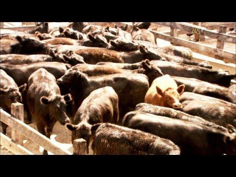 America's Food Crisis: THE OMNIVORE'S DILEMMA