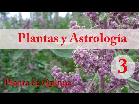 Plantas y Astrología - 3