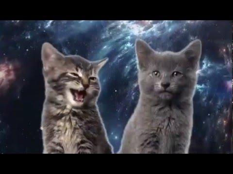 Gatitos cantando en el espacio