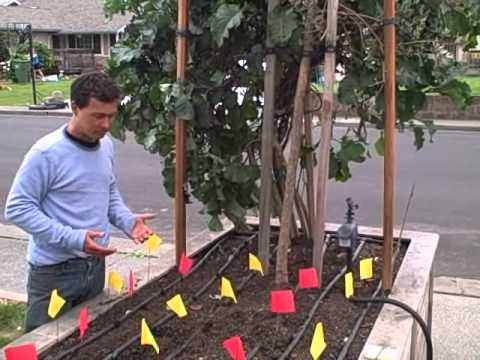 Planting Pepper Plants the Square Foot Gardening Way