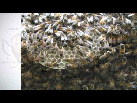 Introduction to Natural Beekeeping with Phil Chandler