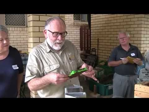 Australian Native Bees.  Honey collection with Bob the beeman Luttrell