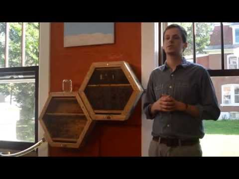 BEEcosystem creators looking to create a buzz about bees
