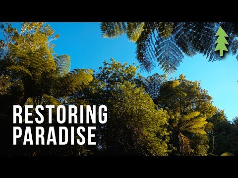 Fighting Climate Change with Regenerative Agriculture - Restoring Paradise