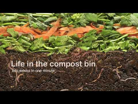 Vermicompost - Life in the compost bin
