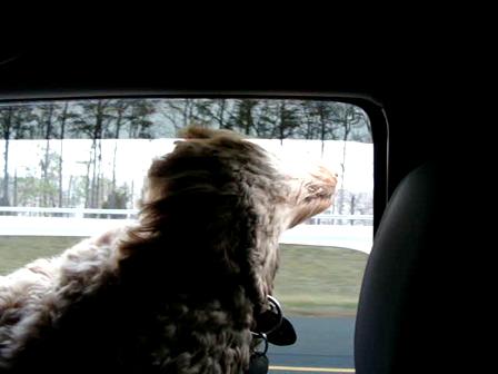 Car rides are fun!