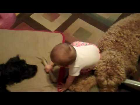 Chew Toys are good for puppies AND babies!