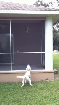 Zoe & the Squirrel