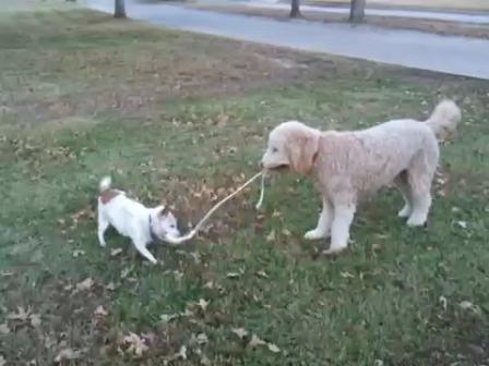 Video uploaded on December 2, 2010