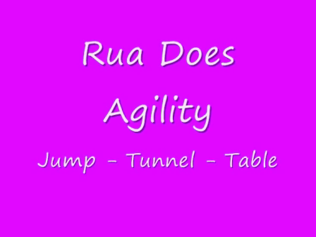 Rua Agility - Jump_Tunnel _Table