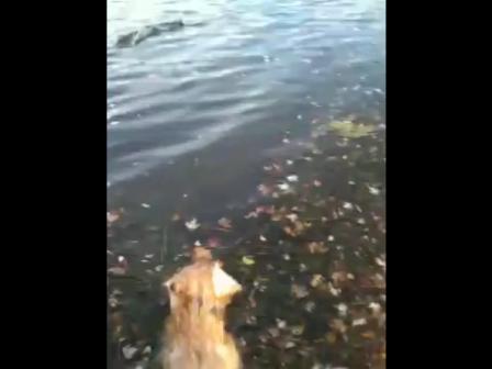 Cooper Swims!