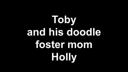 Toby and his doodle foster mom Holly