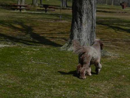Daisy at the Park