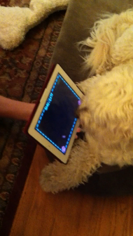 Lucca vs the iPad