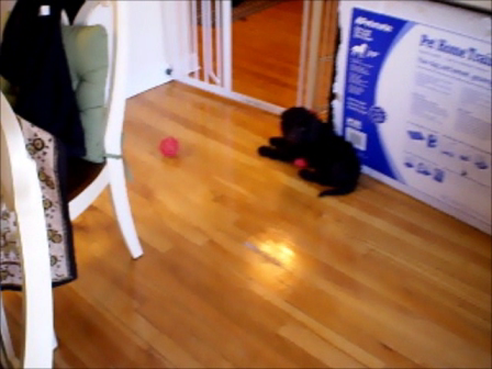 Baby Sophie Bear Plays with her Ball