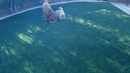 Playtime with Mo and Biscuit