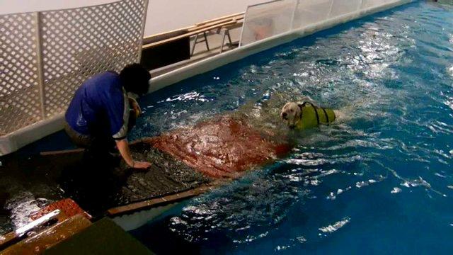 Auggie's first swim