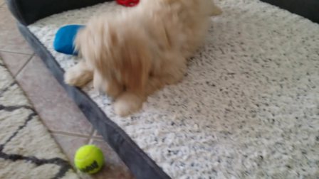Dexter playing