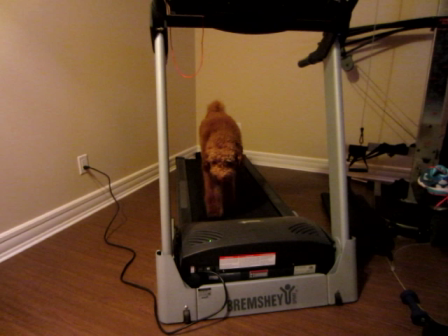 Saved by the treadmill!