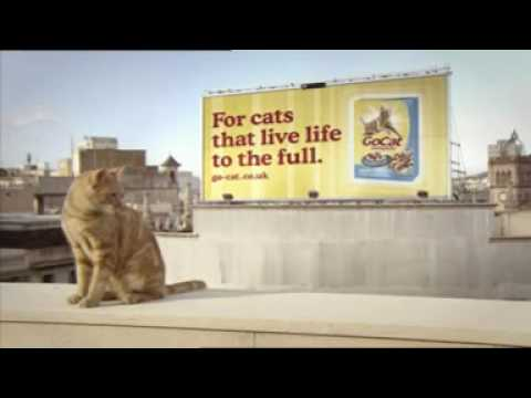 Bobo: feline freerunner commercial