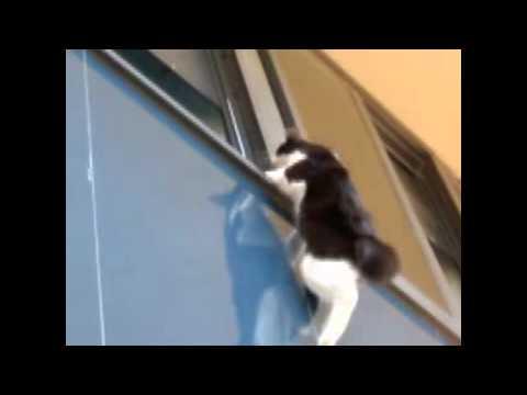 Cat Parkour 2