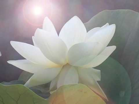 heart lotus meditation