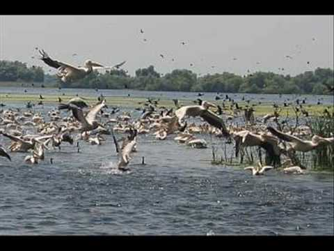 Danube Delta