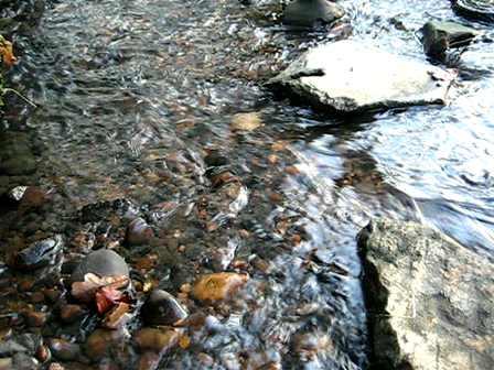 Woodbrooke stream in December