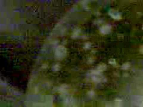 "14.Poetryclip (5.12.09): ""ERWEITERTER SEELENBEGRIFF (Extended Soul)"""