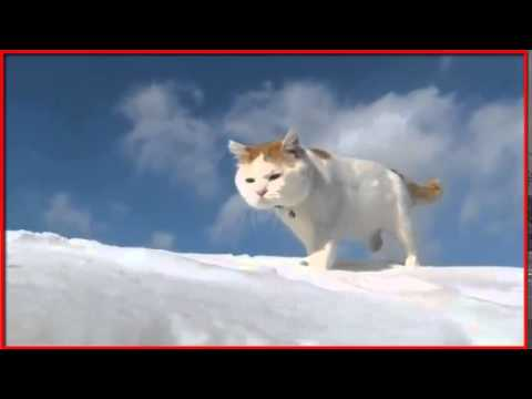 (HD)Funny Cats Videos in the sky ~ Funny Videos 2014 - Funny Cat Videos Ever