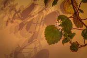 Houseplant_Shadows_HDR4_sm
