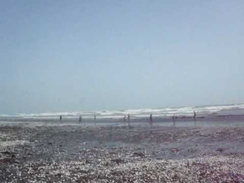 Millions of SeaShells appearing on Pakistani Beaches