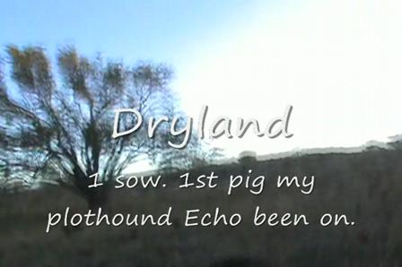 Dryland sow