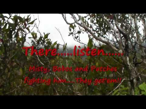 Kauai Boar Hunt 6/21/10