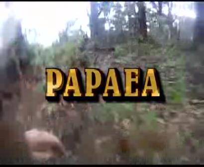nice boar papaea