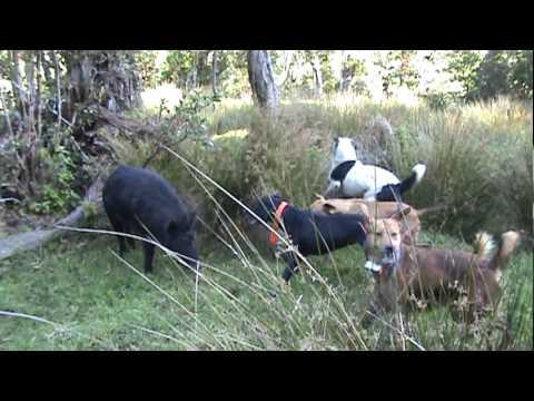 Yung Forest Boar